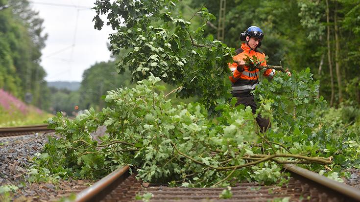 Mehr Stürme, mehr Streckensperrungen - so war es bisher. Doch Naturschutz und eine zuverlässige Bahninfrastruktur lassen sich in Einklang bringen. Dies stellen drei Verbände in einem gemeinsamen Positionspapier fest.
