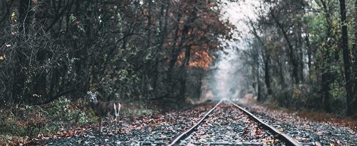 Die Reaktivierung von Bahnstrecken bietet viele Vorteile.